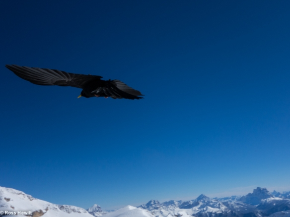 Chamonix skiing 2014-54